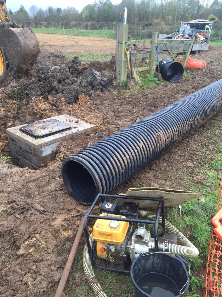 Bourton Meadow update